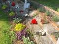 Centenary Garden (1)