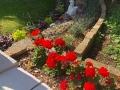 Centenary Garden (3)