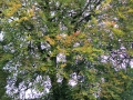 Edenderry (3).jpg